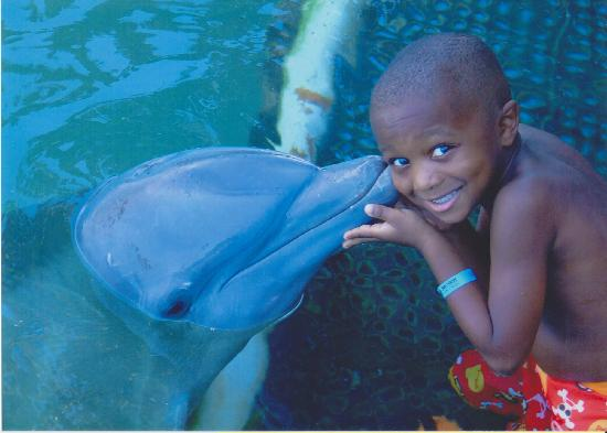 Dolphin Cove: Our son with the dolphin.