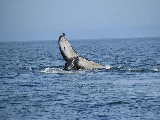 Admiral Digby Inn and Cottages: Zodiac Whale Tours - no zoom lens !!