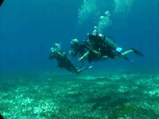 Pro Dive Mexico: Diving at Cozumel (1)