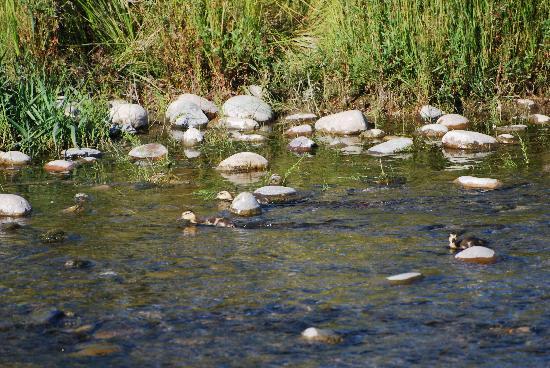 Wildlife Expeditions of Teton Science Schools: young Mallard ducks feeding