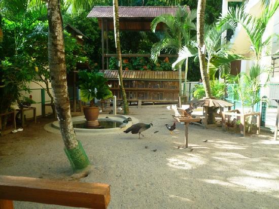 โรงแรมเอวิลเลียน: The animals' farm