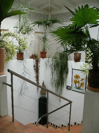 Hotel Horizontes de Montezuma: The stairway.