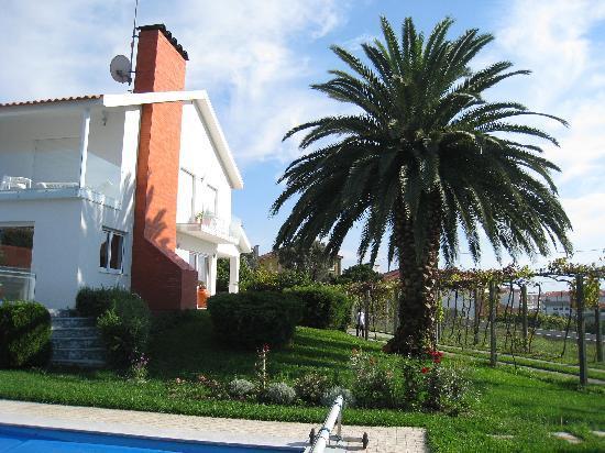 Viana do Castelo, Portugal: le palmier une merveille