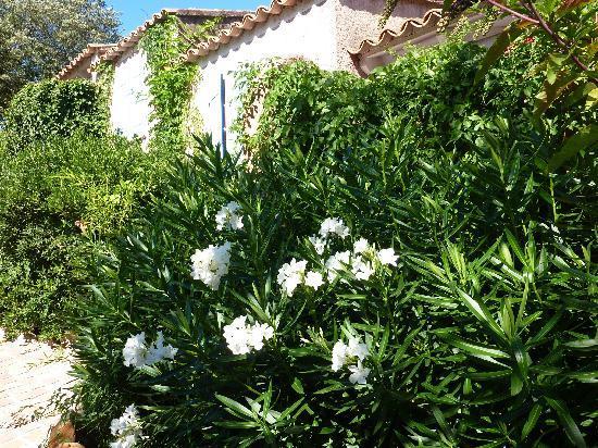 Residence Storia di Blue : Plein de fleurs dans les allées