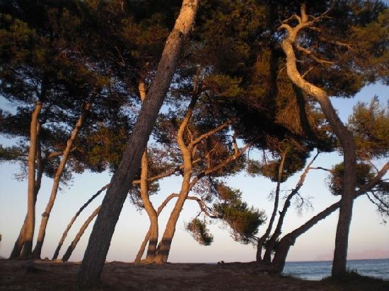 Eden Alcudia: Playa de muro beach