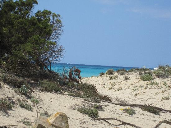 Es Trenc: arrivi alla spiaggia