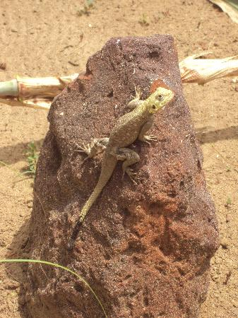 Lookea Royal Baobab: LEZARD