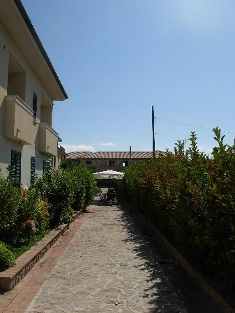 Residence Oliveto a Mare: Uno degli Olivi