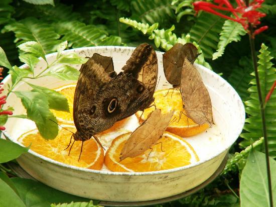 Parque de las Ciencias: Serre aux papillons