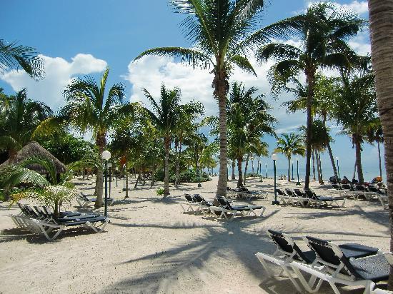 Barcelo Maya Caribe: Maravilla de playa, con palmeras