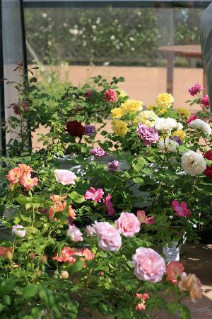 Bellfarm : 薔薇の季節