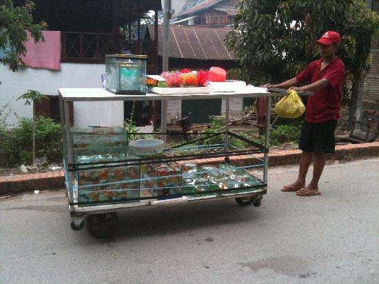 Villa Maly : Passed by this goldfish seller pushing his cart while we were walking out from the hotel, good n