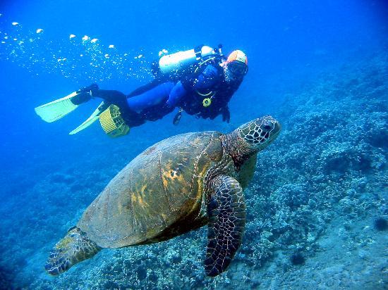 Scuba Luv Maui: Makena Beach Dive, Maui