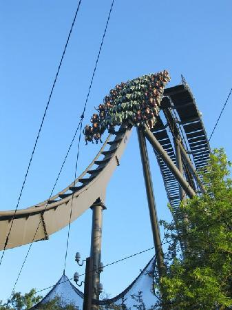 Gardaland Resort: raptor