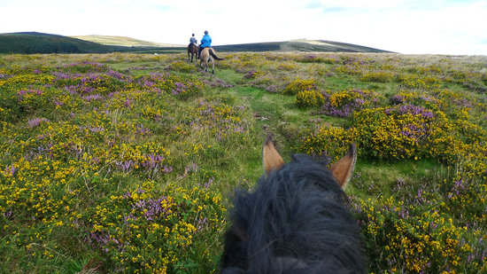 Widecombe in the Moor, UK: Riding on the moor