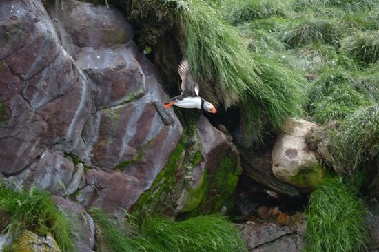 2011 - adorable Puffin