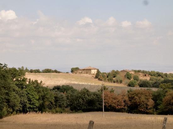 Bosco della Spina : View