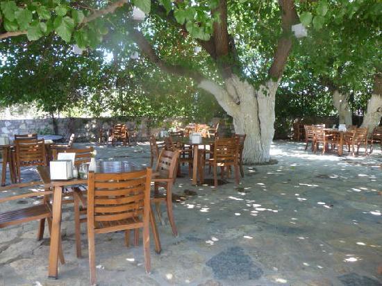 Meis Apart: breakfast area under mulberry tree