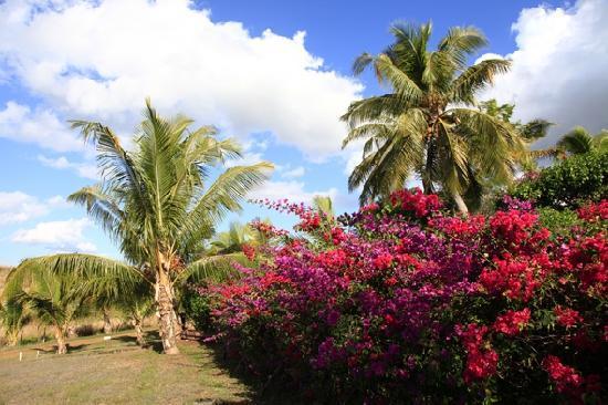 Palmlea Farms: Palmlea - Natur pur!