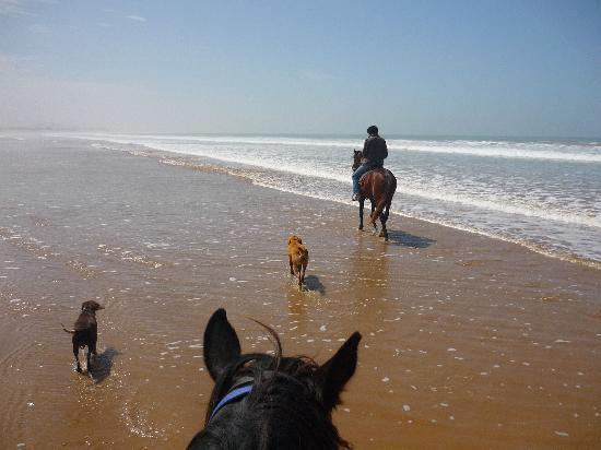 Equi Evasion: the dogs also having fun