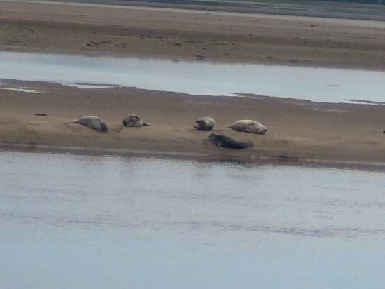 Parkdean - Grannie's Heilan' Hame Holiday Park: The Seals can be found minutes along the Beach