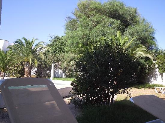 Hotel Club President: jardin picine