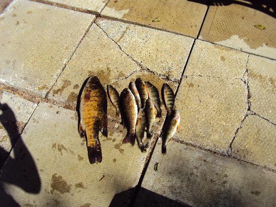 Motel Ours Bleu : gefangene Fische