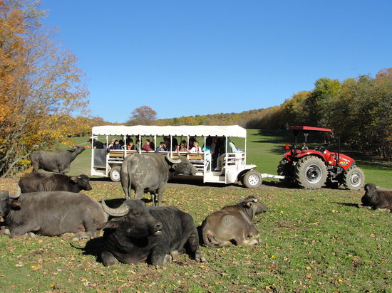 Varysburg, NY: Animal Park Tours