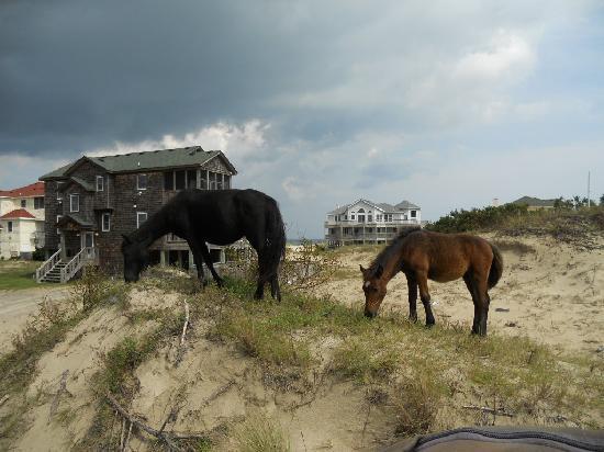 Wild Horse Adventure Tours: Horses on dunes.