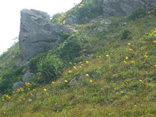 Cape Hirakubozaki: 彼岸花