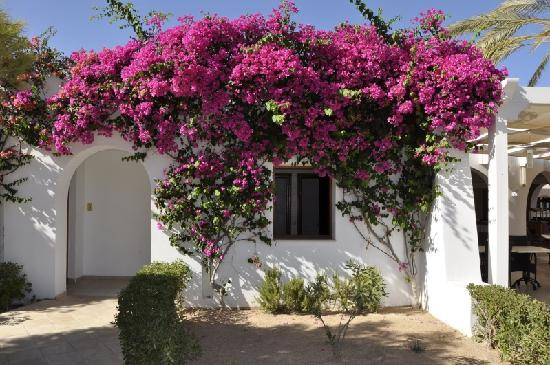 Djerba Plaza Hotel & Spa : Bougainvillée