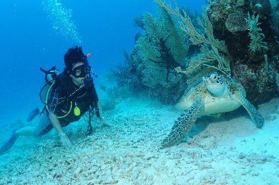 Akumal Dive Shop: Discovering Sea Turtles
