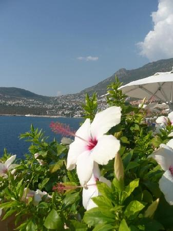 Patara Prince Hotel & Resort : view from pool