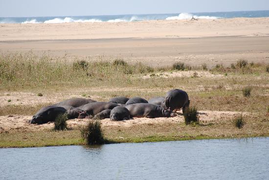 Ndiza Lodge and Cabanas: Hippo's on the beach