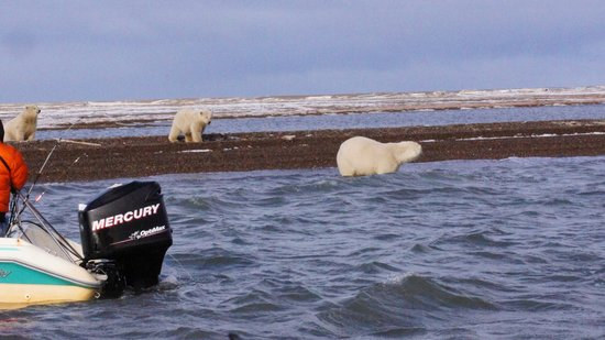 Warbelow's Air Ventures - Polar Bear Tour: You don't even need a telephoto lens!
