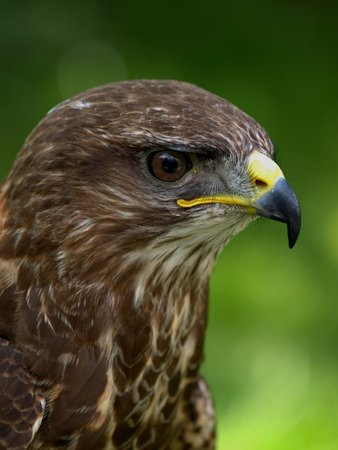 Fallowfields Falconry