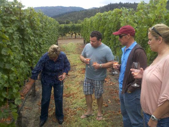 Eclectic Tour: Vineyard tour and grape tasting