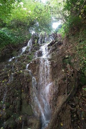 Dunedin: Waterfall