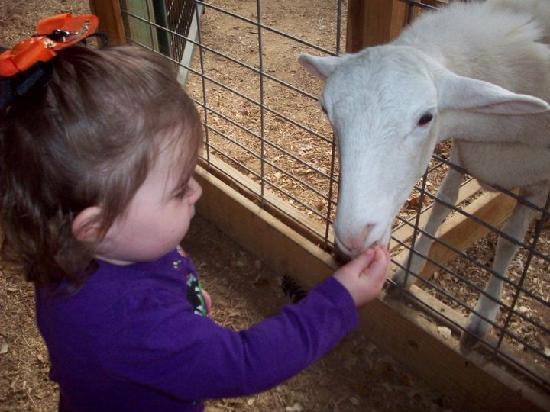 Σρέβεπορτ, Λουιζιάνα: Feeding a goat