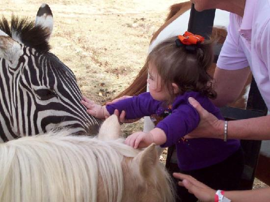 Shreveport, LA: Petting a zebra