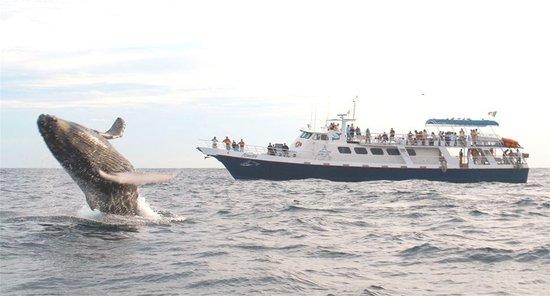 Baja Boat Adventures : ADVENTURE