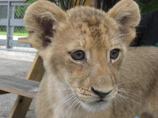 McCarthy's Wildlife Sanctuary: Minza