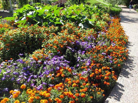 Denver Botanic Gardens: Denver Botanic Garden - All American Select Garden