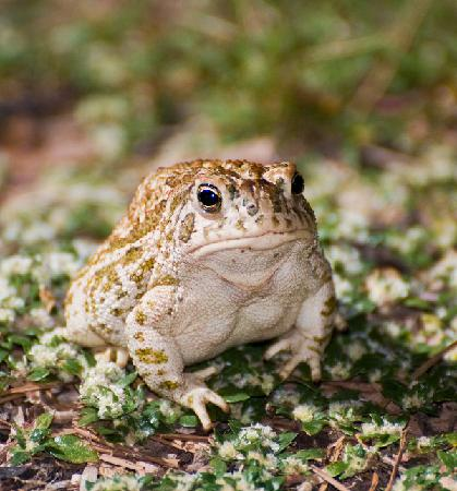 Quailway Cottage : Toad at Night