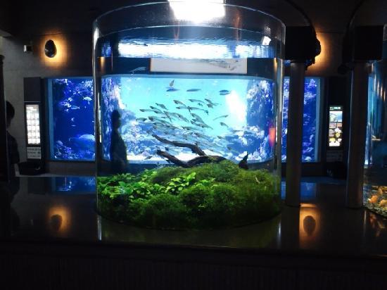 Oita, Japan: 大分マリーンパレス水族館 うみたまご
