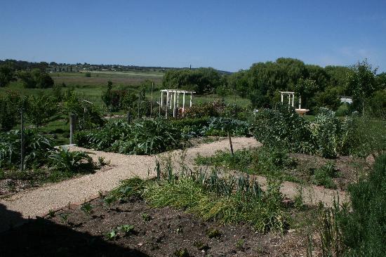Hampton Court: vegie patch