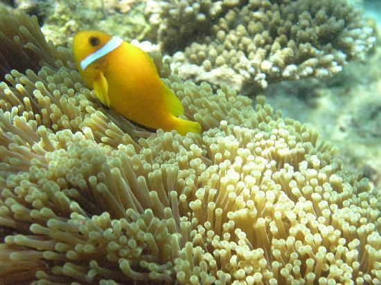 Kurumba Maldives: Plenty of fish life