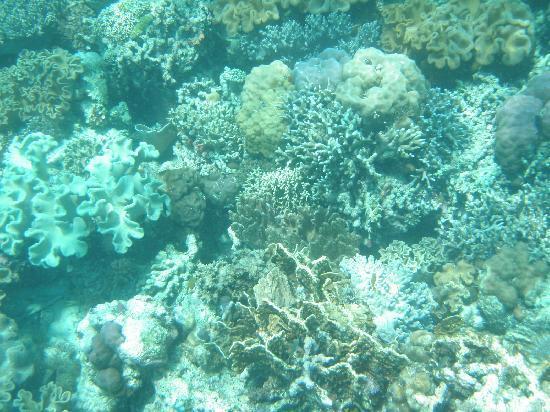 Hale Manna: coral garden