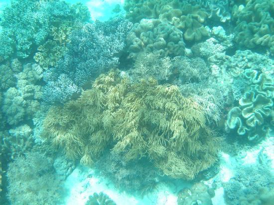 Hale Manna: coral gardens