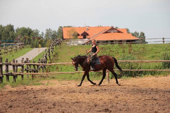 Kruklin Siedlisko: Konie